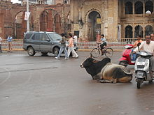 Bull in middle of the street, Gwalior, India.jpg