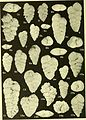 Bulletins of American paleontology (1955-1956) (20476884406).jpg