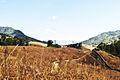 Buning Meadow1.jpg