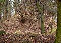 Burg Braunshorn aus Suedwesten.jpg