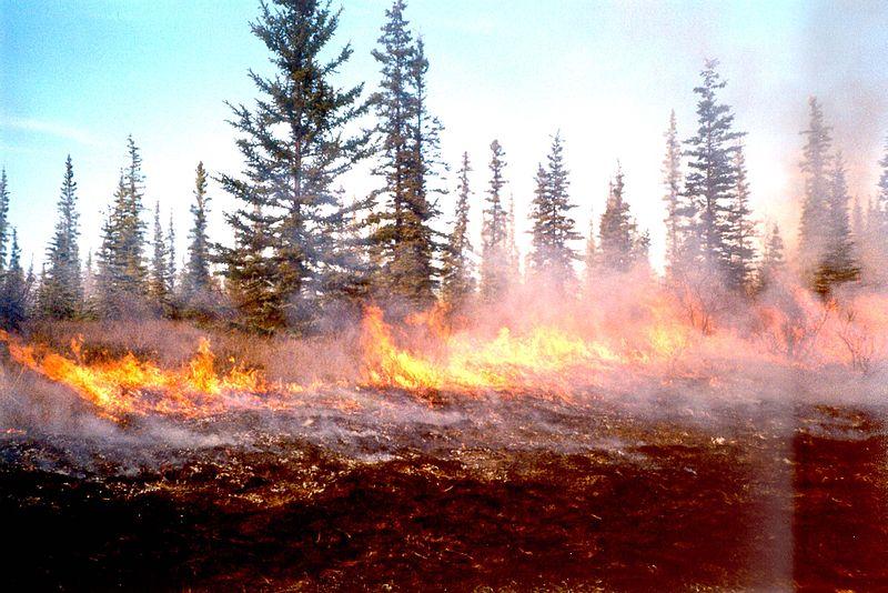 File:Burn Near Beaver Village.jpg