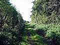 Bushy Lane - geograph.org.uk - 1498262.jpg