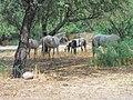Butcher Jones Road, Tonto National Forest, Fort McDowell, AZ 85264, USA - panoramio (6).jpg