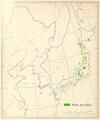 CL-13 Pinus parviflora.png