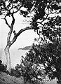 COLLECTIE TROPENMUSEUM Kustgezicht met een cactus in de omgeving van Gorontalo TMnr 60018660.jpg