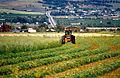 CSIRO ScienceImage 4570 Cutting hay near Aldinga south of Adelaide in South Australia 1992.jpg