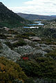 CSIRO ScienceImage 73 Tarn Shelf Mt Field National Park.jpg