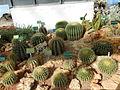 Cactees-Jardin-Plantes 08.JPG