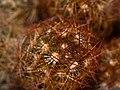 Cactus (117249015).jpeg