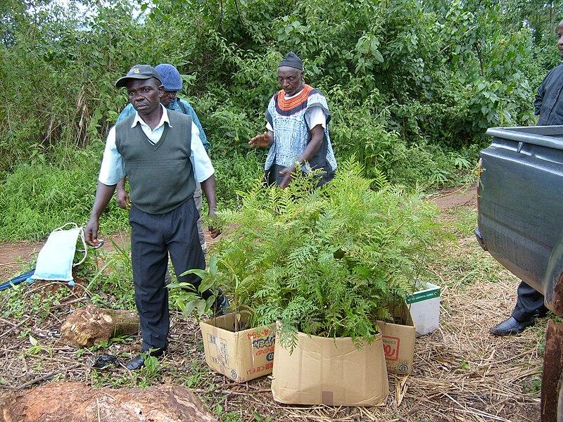 File:Cameroon 2007 - men planting trees.jpg