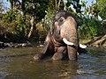 Camp Elephant Sitting River Mudumalai Mar21 A7C 00388.jpg