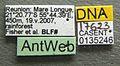 Camponotus aurosus casent0135246 label 1.jpg