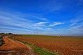 Campos, provincia de Ciudad Real (3252338685).jpg
