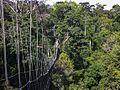 Canopy Walkway - Kakum NP - Ghana 14 IMG 0798 (16195825902).jpg