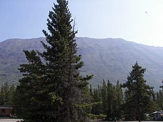 Caribou Mountain from Spirit Lake Wilderness Resort, Yukon.jpg