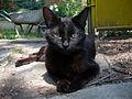 Cat E21.jpg