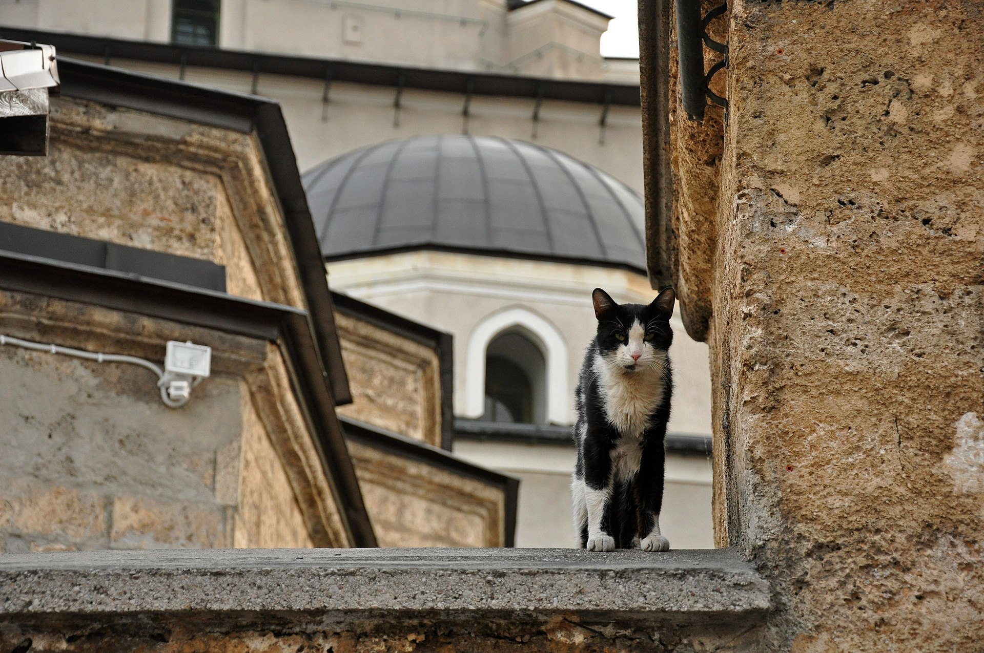 The Prophet Muhammad's (saw)favourite cat Muezza