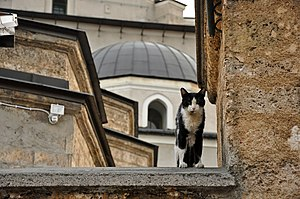 Islam and cats - Cat in the courtyard of Gazi Husrev-beg Mosque in Sarajevo, Bosnia and Herzegovina