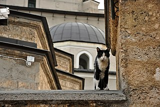 Islam and cats Islams attitude towards cats