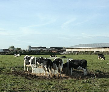 Cattle round a feeder with Avon Farm - geograph.org.uk - 1563342.jpg
