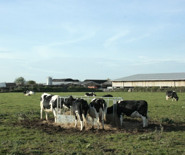 Cattle round a feeder with Avon Farm - geograph.org.uk - 1563342