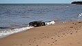 Cavendish Beach, Prince Edward Island (471103) (9450667842).jpg