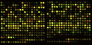 Complementary DNA - Output from a cDNA microarray used in testing