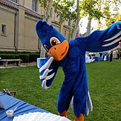 The Cecil the Sagehen costume (blue, with white wingtips and an orange beak and legs) at a function at Memorial Court