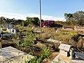 Cementerio Guaribe - panoramio (4).jpg
