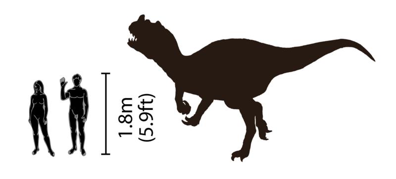 File:Ceratosaurus size comparison.png