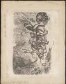 Cercocebus fuliginosus - 1700-1880 - Print - Iconographia Zoologica - Special Collections University of Amsterdam - UBA01 IZ19900131.tif