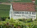 Chambertin Clos de beze Domaine Pierre Damoy vineyard.jpg