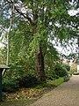 Chelsea Physic Garden View.jpg