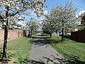 CherryBlossomBrickhill.JPG