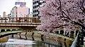 Cherry blossoms beside Hori river near Nayabashi - 3.jpg