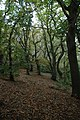 Chestnut Woods - geograph.org.uk - 1066894.jpg
