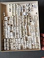 Chrysomelidae collection, Natural History Museum, London 130.jpg