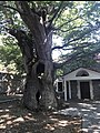 Church of Assumption and plane tree. Karyes, Laconia.jpg
