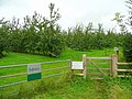 Cider orchards by the Offa's Dyke Path - geograph.org.uk - 929461.jpg