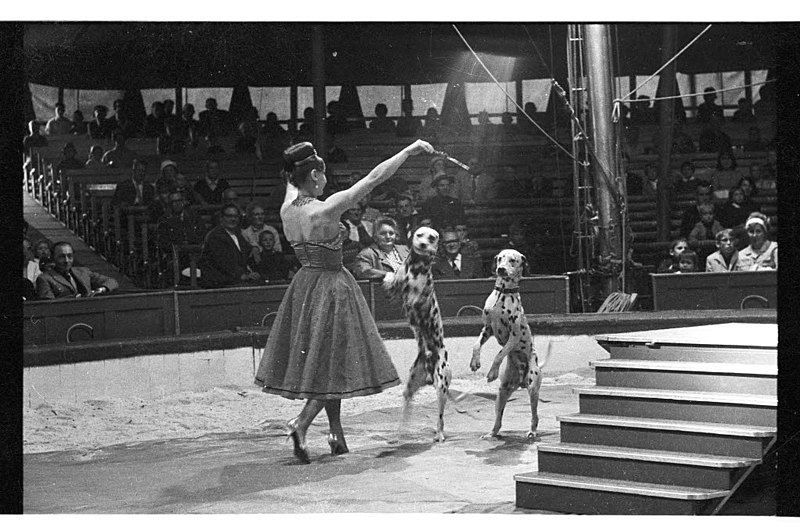 File:Circus Sarrasani auf dem Wilhelmplatz (Kiel 33.731).jpg