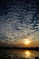 Cirrocumulus stratiformis - Clouds - Salt Lake City - Kolkata 2013-11-16 0619.JPG