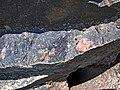 Clast-rich impact pseudotachylite (Sudbury Breccia, Paleoproterozoic, 1.85 Ga; Windy Lake Northwest roadcut, Sudbury Impact Structure, Ontario, Canada) 17 (46950037184).jpg