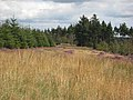 Clearing in Harwood Forest - geograph.org.uk - 541349.jpg