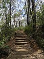 Cliff Top Track - panoramio (13).jpg