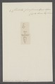 Cliodita fusiformis - - Print - Iconographia Zoologica - Special Collections University of Amsterdam - UBAINV0274 080 08 0008.tif