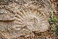 Cluny - Fossile dans un mur (détail).jpg