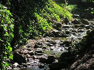 Live Oak Park (Berkeley) - Image: Codornices Creek in Live Oak Park