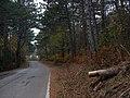 Colori d'autunno in Carso - panoramio.jpg