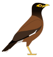 CommonMyna.svg