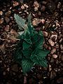 Contrasting leaves and rocks.JPG